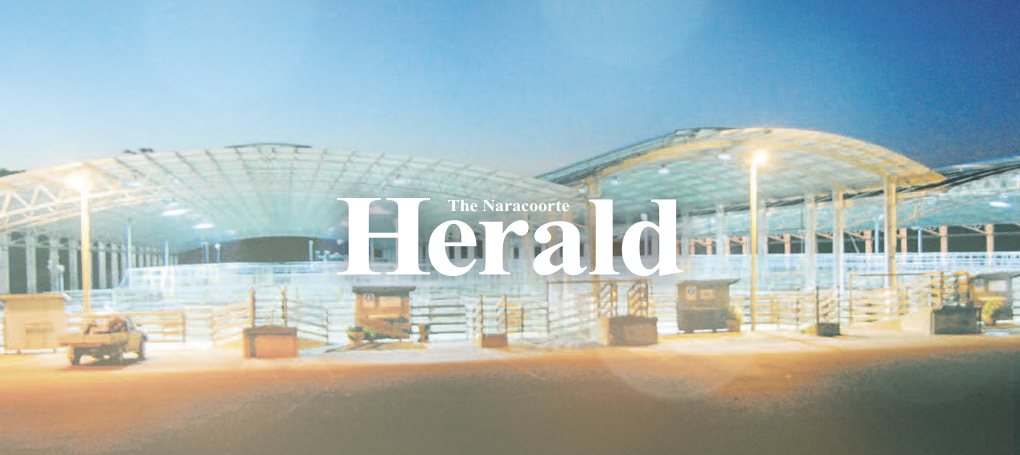 the-naracoorte-herald-hero-2